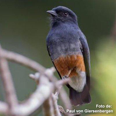 ¡Vamos a escoger el Día del Observador de Aves en Venezuela!